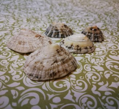 Limpet Shells